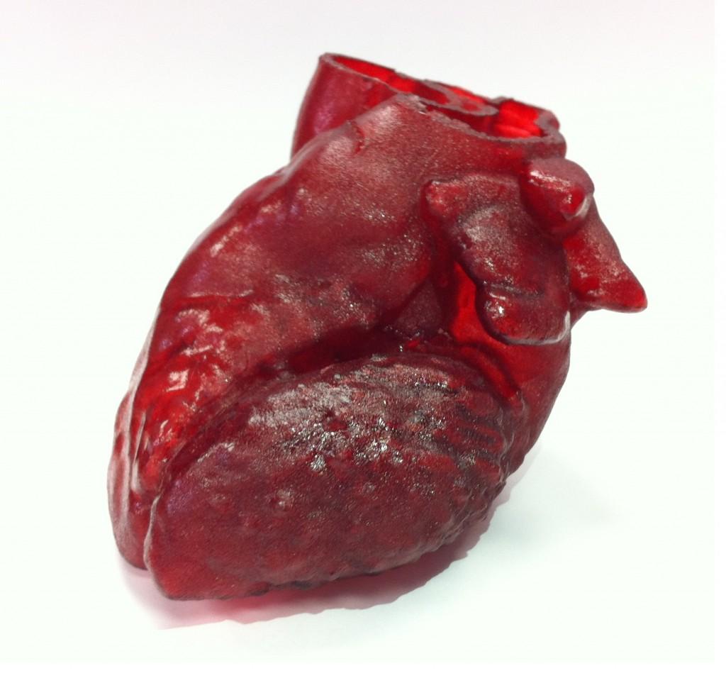 3D printed model heart