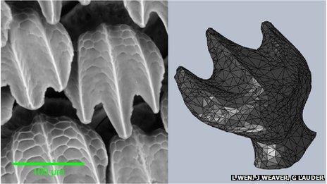 3D printed shark skin